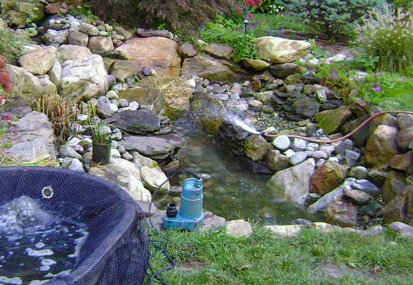 Pond and pump system