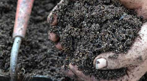 Hands full of potting soill