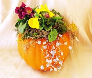 Pumpkin Pansy Planter