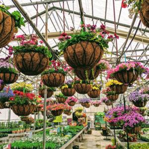 Beaver Bark | Nursery, Gift Shop & Garden Center | Tri-Cities, WA